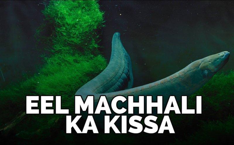 Eel Machali Fish Ka Bayan